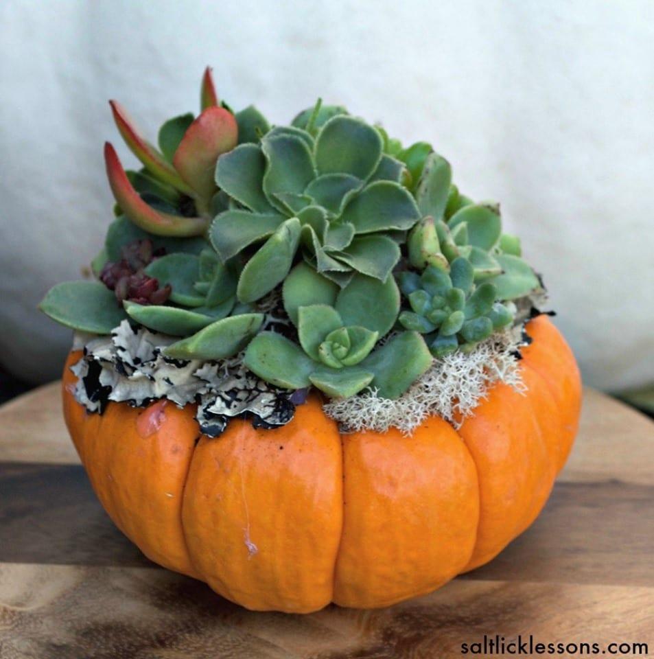 Pumpkin Succulent Class Elmaro Vineyard